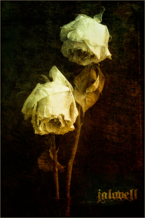 Dried Roses-Still Life Duo Antiqued